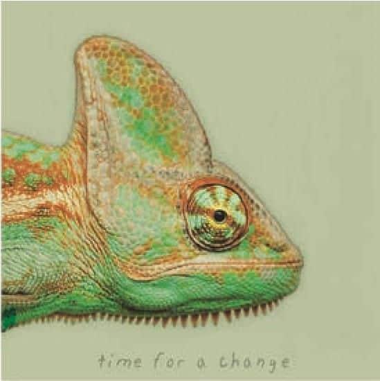canvas, kameleon