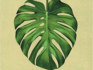 canvas, monstera